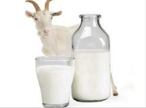 Susu Kambing Etawa Hpai Pak Haji Ismail